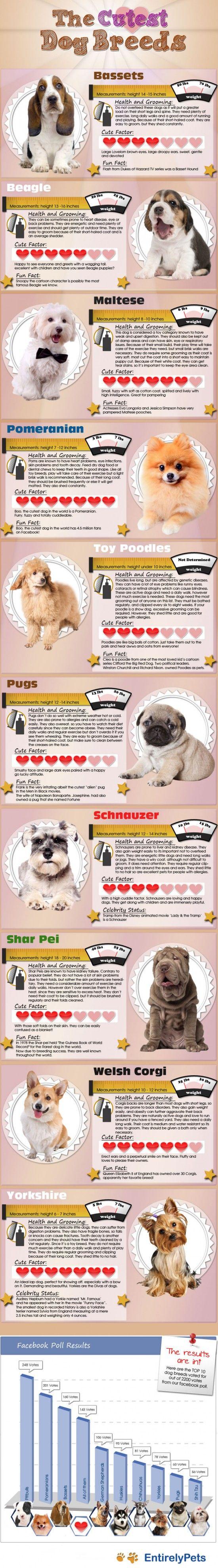 Най-сладките породи кучета